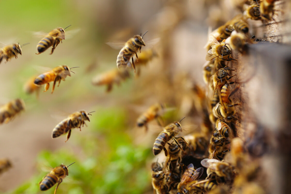 6 Ways To Be A Hero To Bees