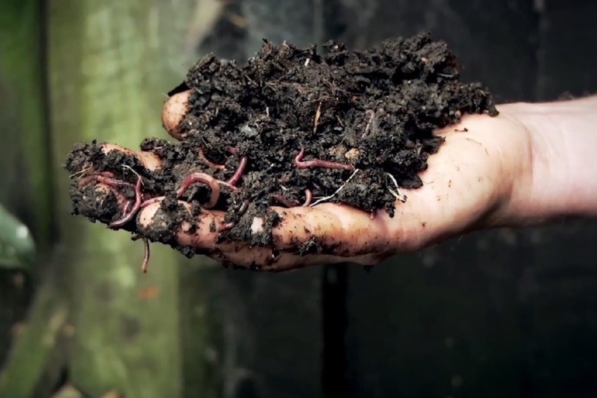 How To Build Healthy Soil