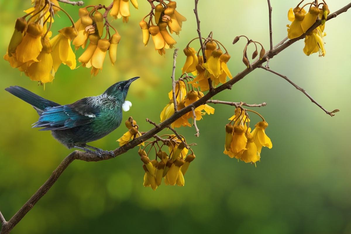 Save native birds in your backyard