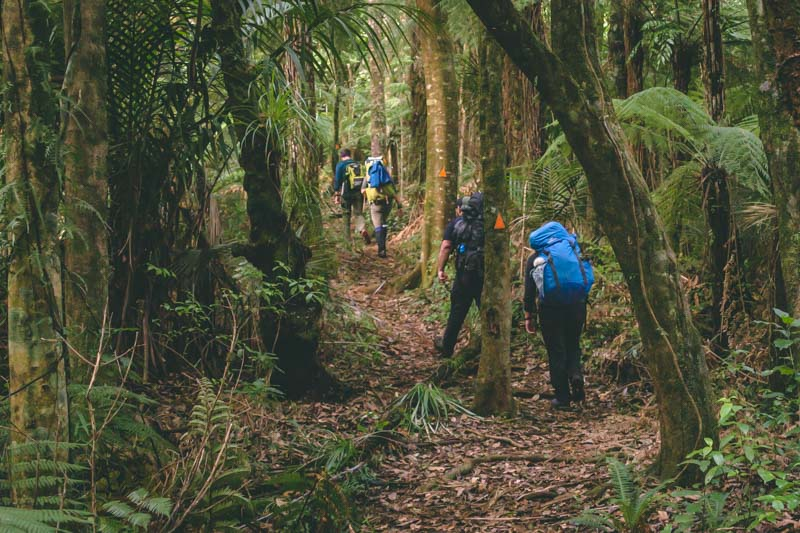 Walk in the woods - Mt Pirongia