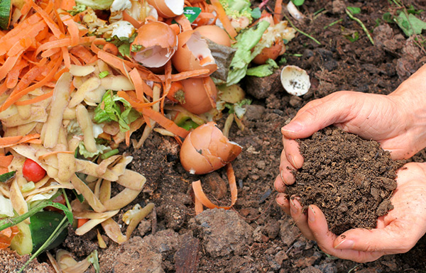 Why and how to start composting