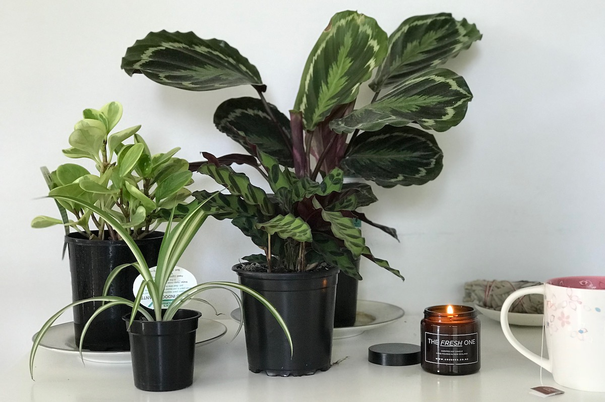 Indoor plants for a serial plant killer