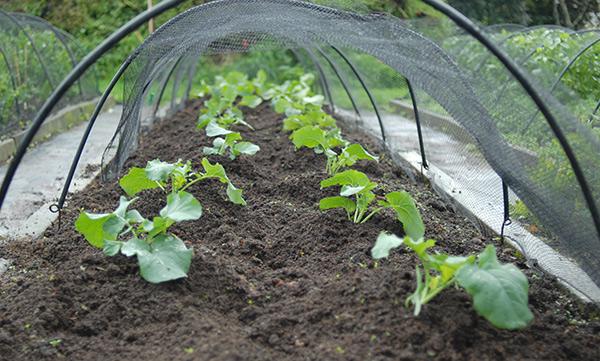 The organic home garden: Winter