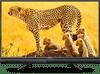 Intex LED-3222 32 inch (81 cm) HD Ready LED TV