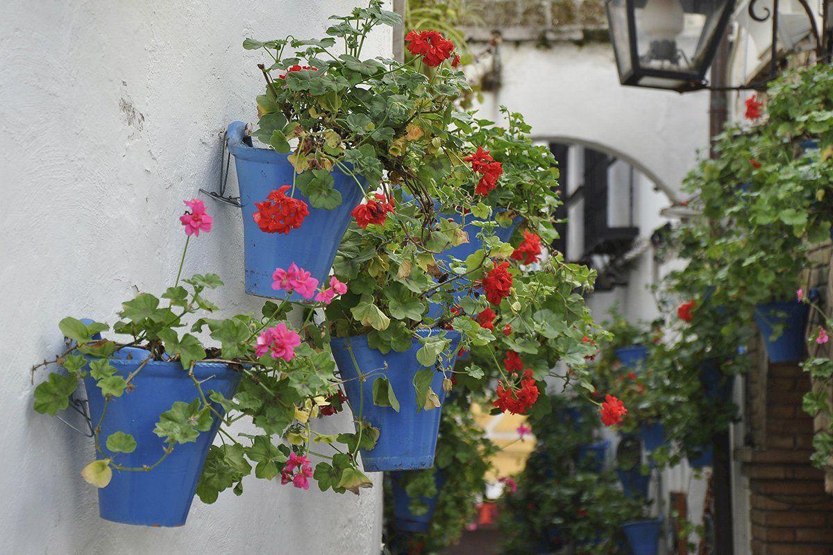 Los patios de Córdoba cumplen 100 años