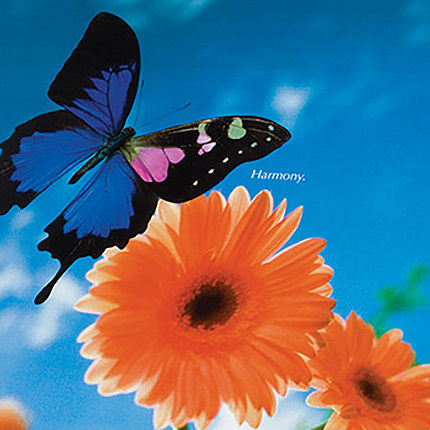 ivax pharmaceuticals harmony banner with flowers and butterfly