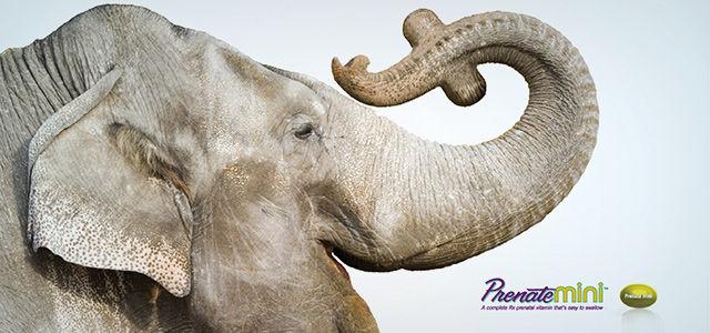 prenate mini advertising banner with elephant
