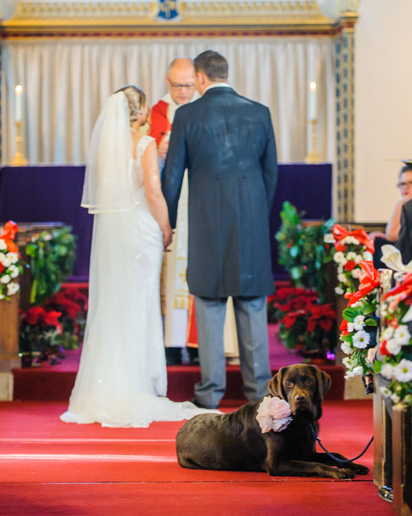 Dog watching in aisle Hellaby Hall wedding photographers Rotherham