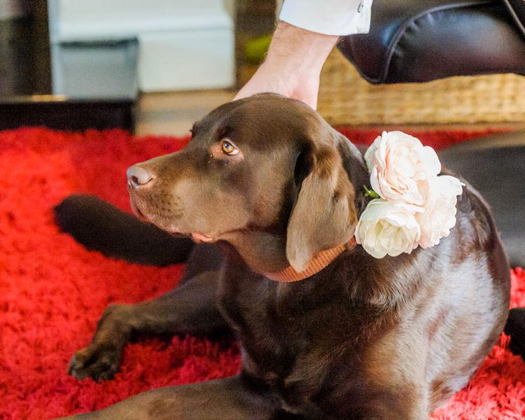 Tiim's dog with wedding flowers Hellaby Hall wedding photographers Rotherham