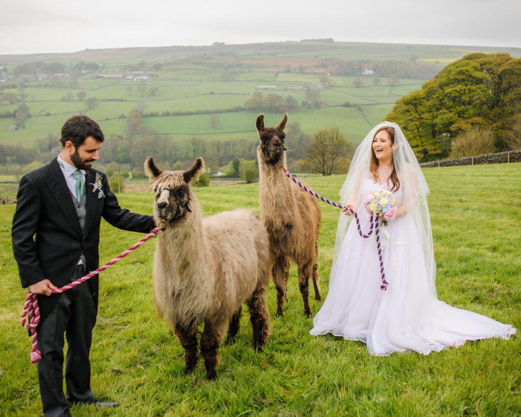 Cumbria wedding photographers, Llama wedding
