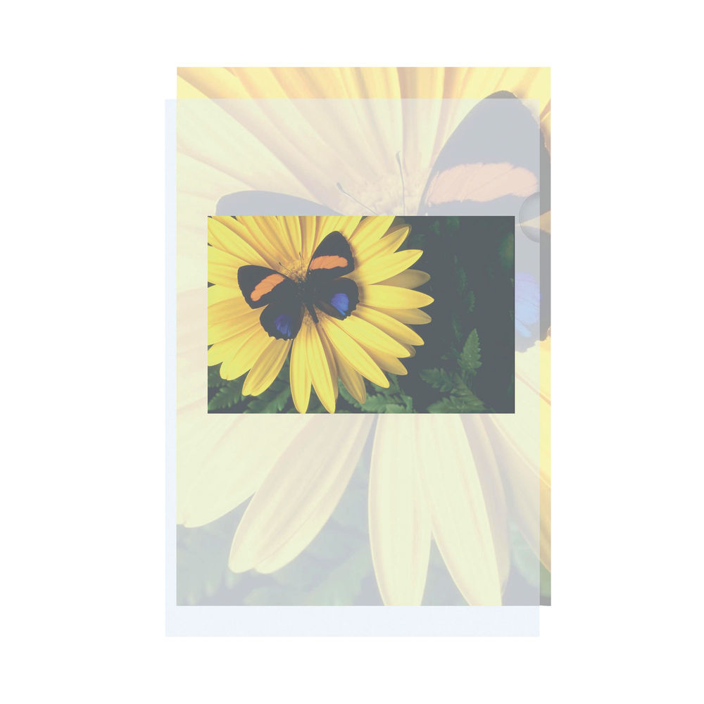 A4 Card Holders (Pack of 100) – 1230012