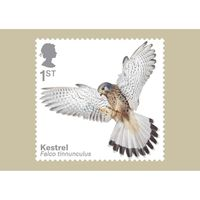 The Birds of Prey Stamp Cards