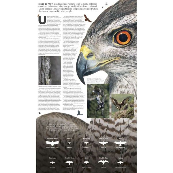 The Birds of Prey Presentation Pack - AP458