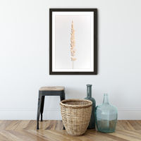 Minimal Pampas Grass on White Art Print Black Frame   Bombinate