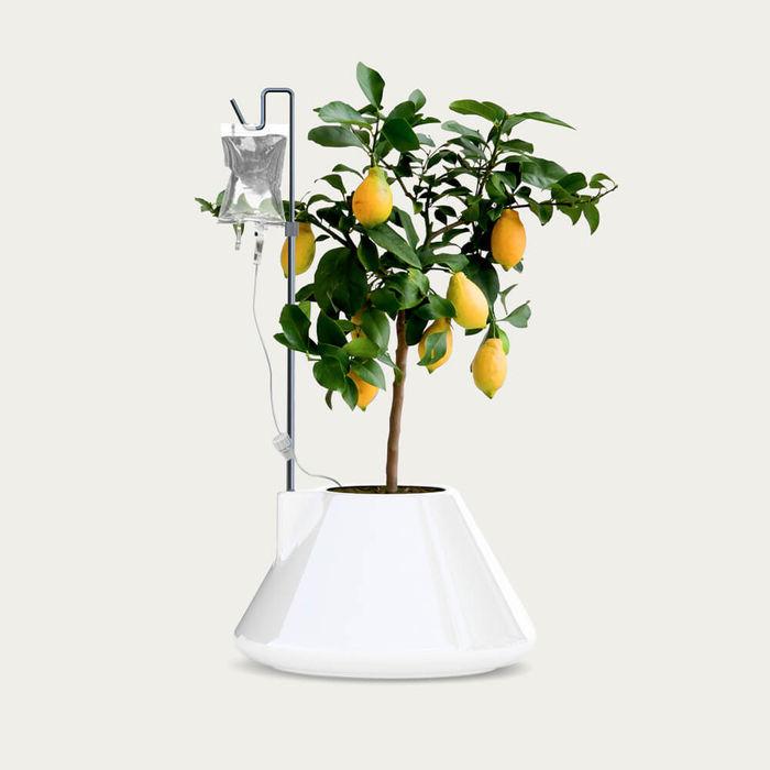 White I.V. Plant Pot | Bombinate
