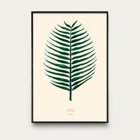 Cocos Nucifera | Bombinate