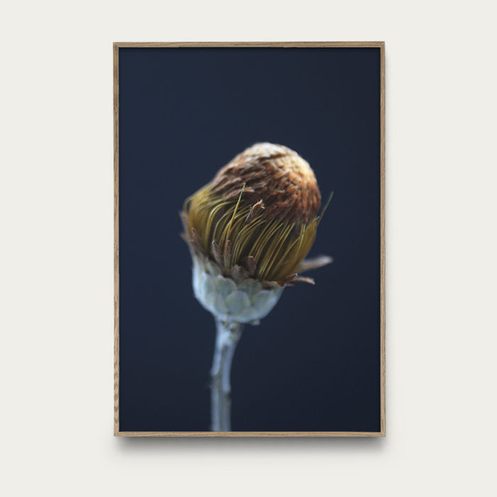 Flower 3 | Bombinate