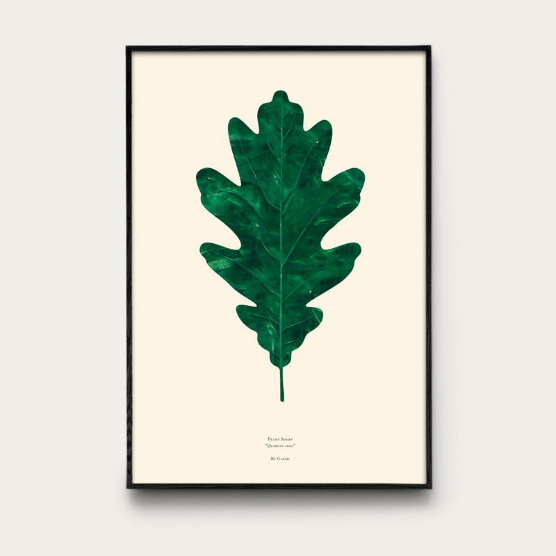 Quercus Alba | Bombinate