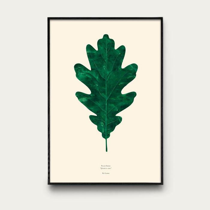 Quercus Alba   Bombinate