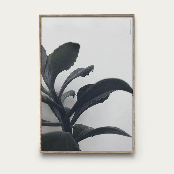 Succulent Plant No 1 | Bombinate