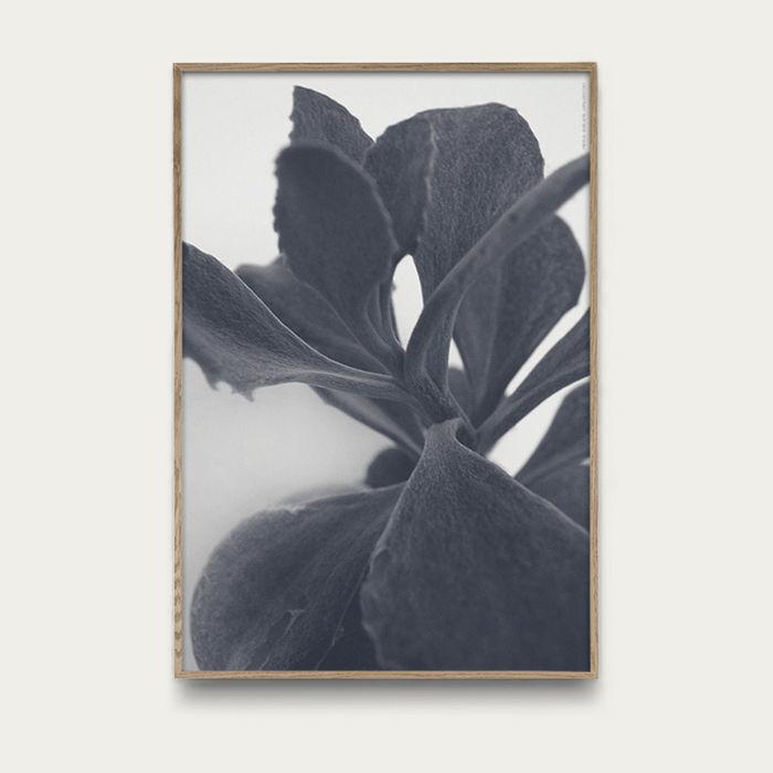 Succulent Plant No 2 | Bombinate