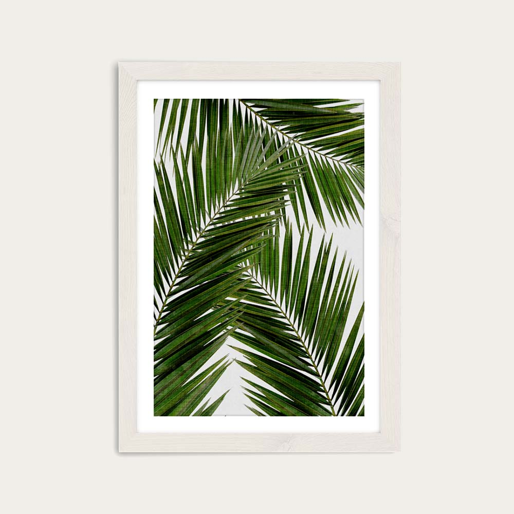 Palm Leaf III Art Print White Frame   Bombinate