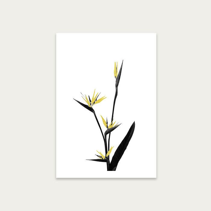 Flower Minimal Black and Gold 5 Art Print Unframed   Bombinate