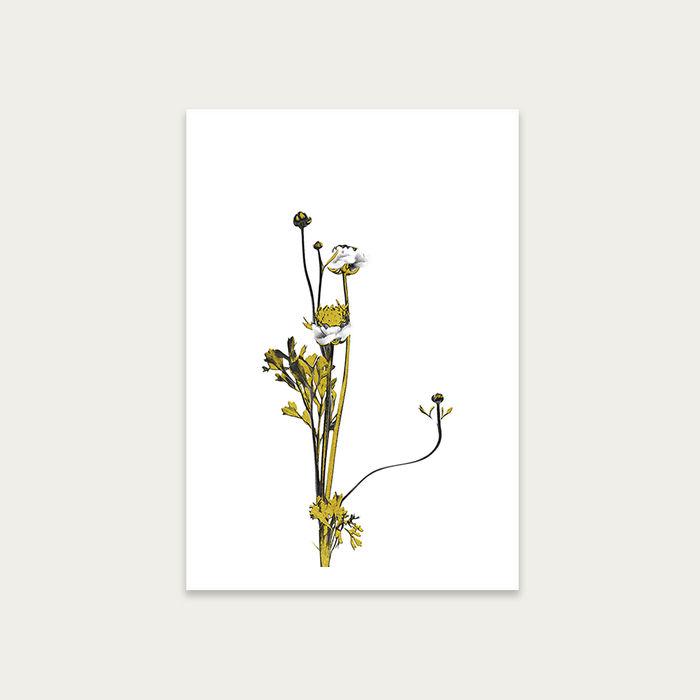 Flower Minimal Black and Gold 8 Art Print Unframed | Bombinate