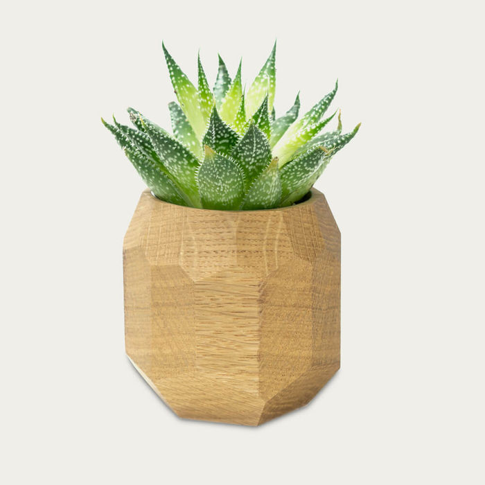 Oak Wooden Geometric Succulent Planter | Bombinate