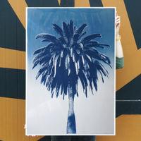 Marrakesh Majorelle Palm Limited Edition Handmade Cyanotype Art Print | Bombinate