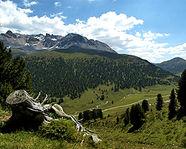 Arvenwald God da Tamangur