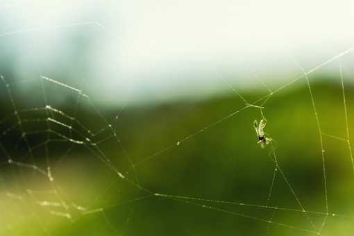 insect spider web