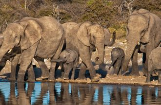 Combatting the Illegal Wildlife Trade in West and Central Africa