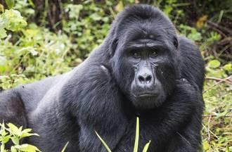 Combatting Wildlife Crime in Uganda