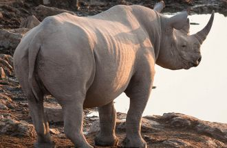 Following the Money: Disrupting Wildlife-Linked Illicit Financial Flows in Kenya, Tanzania and Uganda