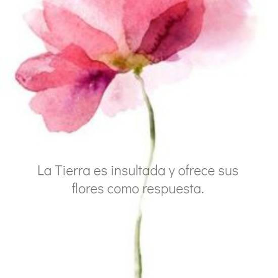 La Tierra es insultada y ofrece sus flores como respuesta.