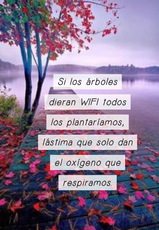 Si los árboles dieran WIFI todos los plantaríamos, lástima que solo dan el oxígeno que respiramos.