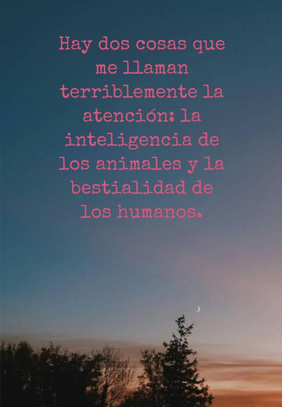 Hay dos cosas que me llaman terriblemente la atención: la inteligencia de los animales y la bestialidad de los humanos.