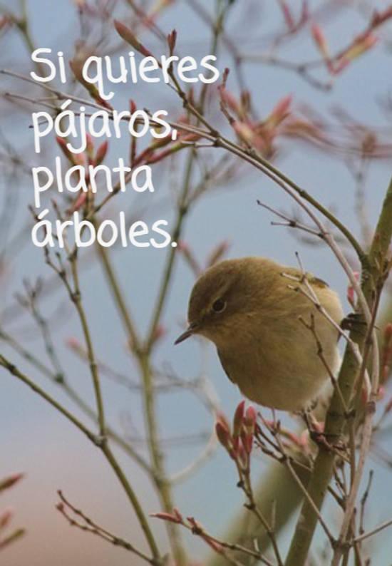 Si quieres  pájaros,  planta  árboles.