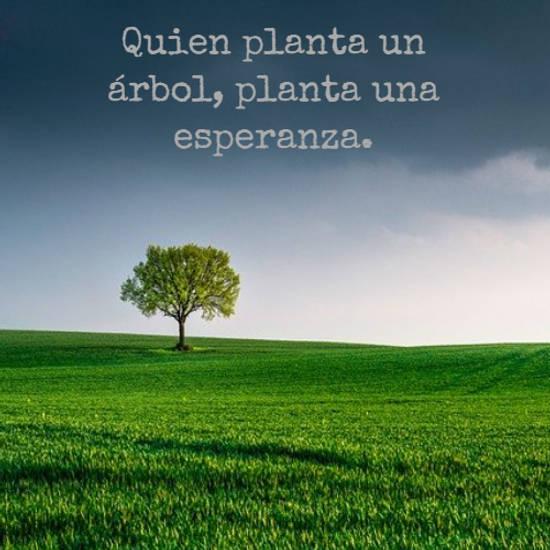 Quien planta un árbol, planta una esperanza.