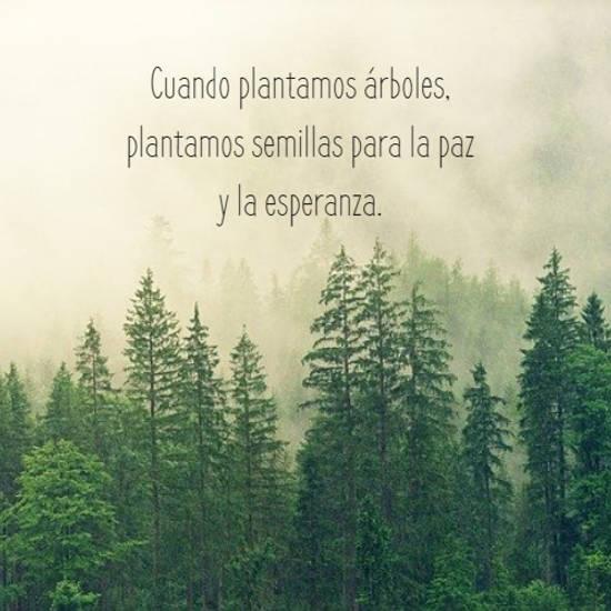Imágenes de la frase: Cuando plantamos árboles, plantamos semillas para la paz y la esperanza.