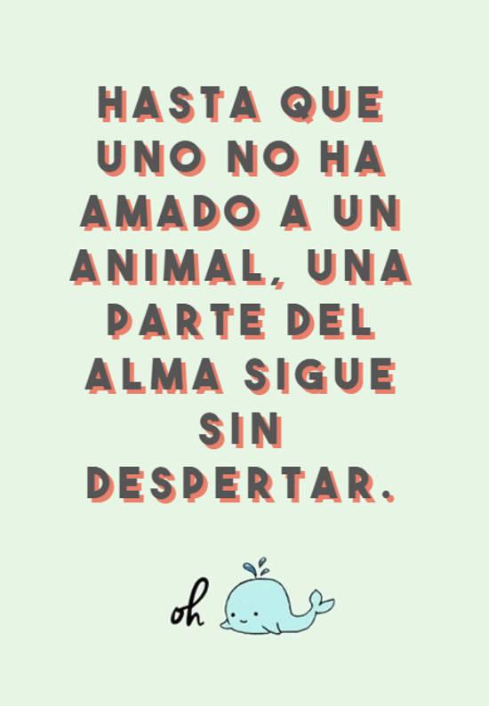 Hasta que uno no ha amado a un animal, una parte del alma sigue sin despertar.