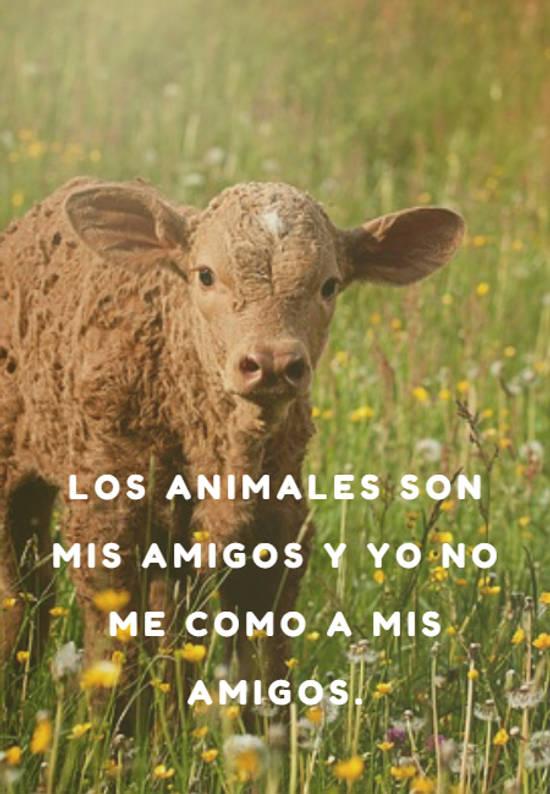 Los animales son mis amigos y yo no me como a mis amigos.