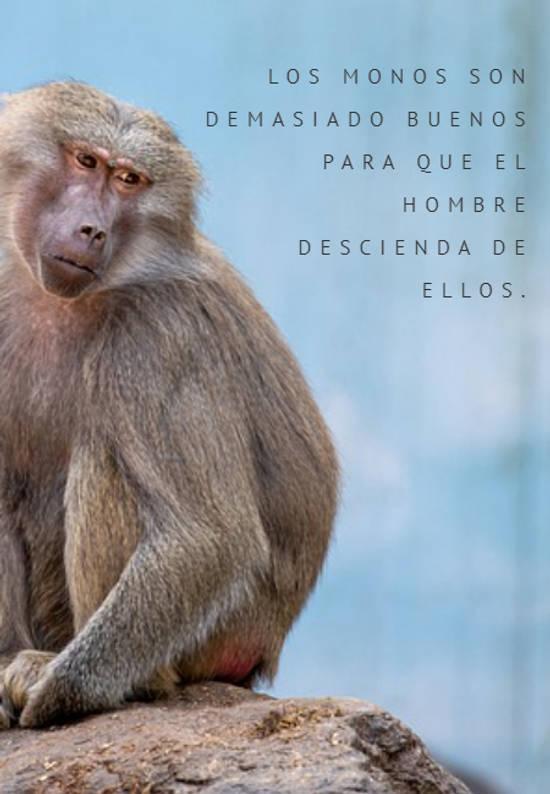 Los monos son demasiado buenos  para que el hombre  descienda de ellos.