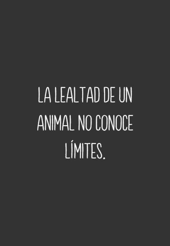 La lealtad de un animal no conoce límites.