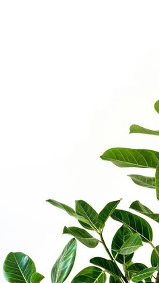 Fondos de Pantalla con Frases - Fondo de pantalla planta verde bonita