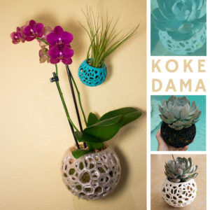 Kokedama Options