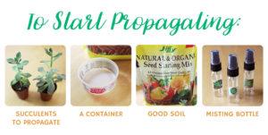 Supplies to start propagating