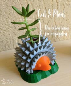 How to fix etoliated plants