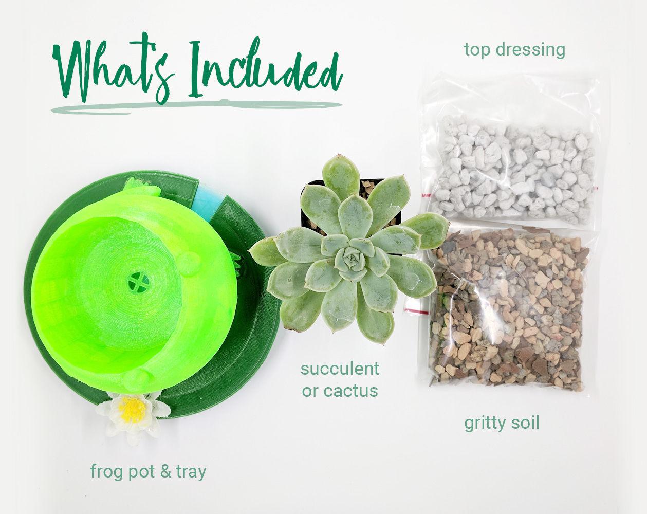 DIY Planter Kit includes soil, top dressing, plant and pot